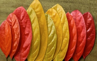 El valor económico, social y medioambiental de la biomasa