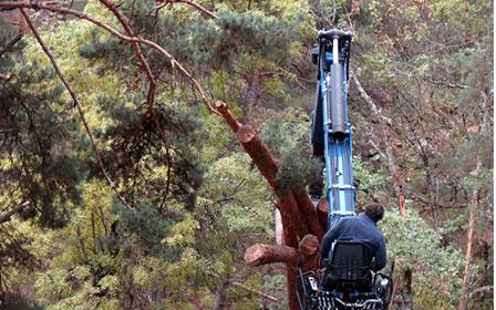 Economía circular bioamsa forestal