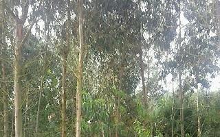 AVEBIOM se une a 'Juntos por los Bosques' y reclama la constitución del Consejo Forestal Nacional